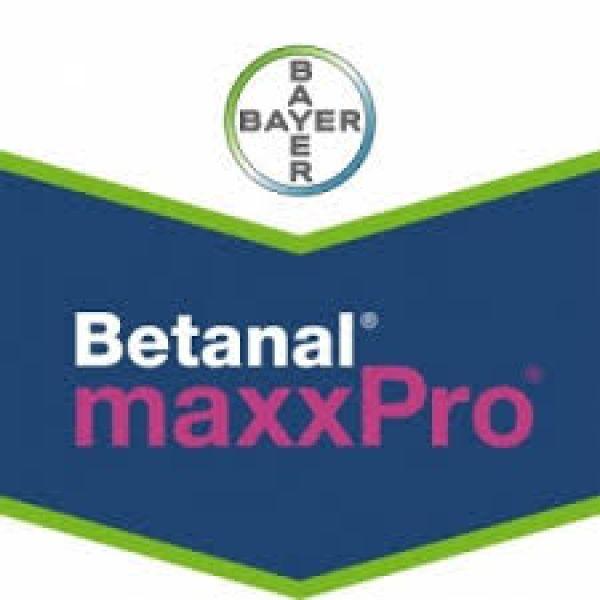 Betanal MaxxPro OD