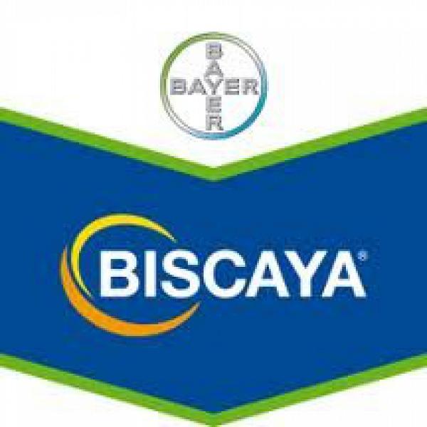 Biscaya 240 OD