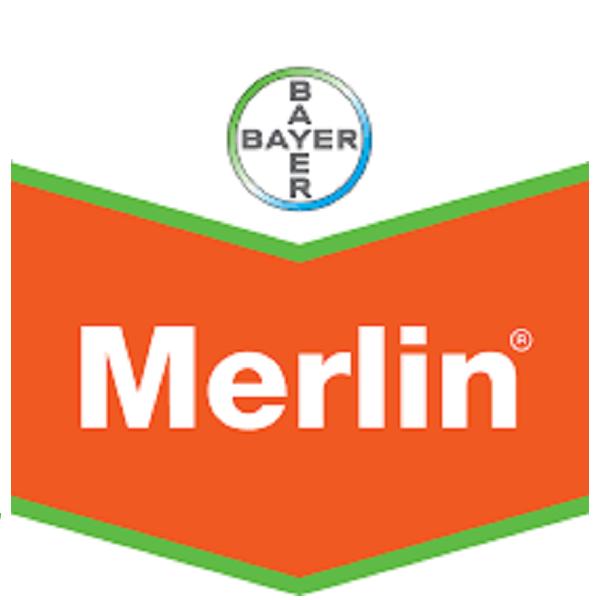 Merlin Duo